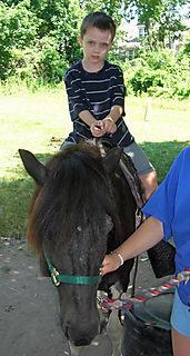 Jack horse