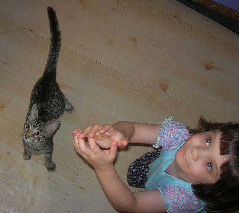 Isaac kitty