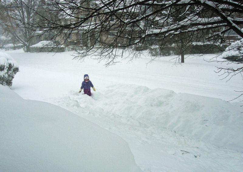 Kitty snow drift