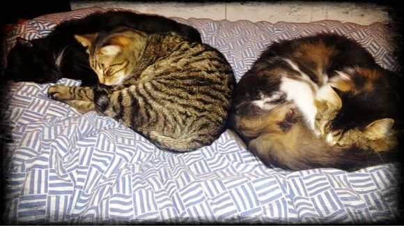 3 Cats all in a Row